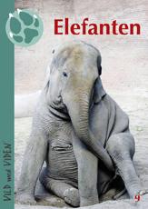 Elefanten09web